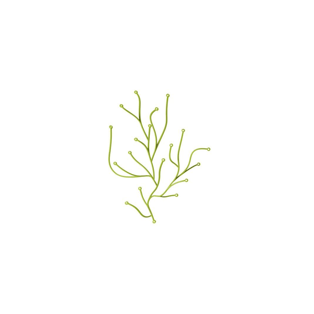 Algue (1)